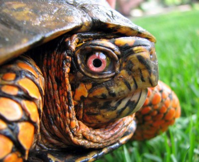 Box Turtle Habitat Accessories Box Turtle World