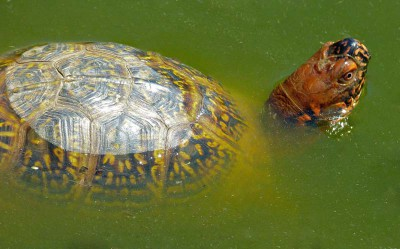 What S A Good Size For A Box Turtle Bath Water Dish Box