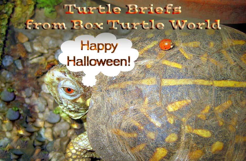 Turtle News Briefs Happy Halloween Box Turtle World